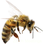 bee.sm+_PNG74690.png