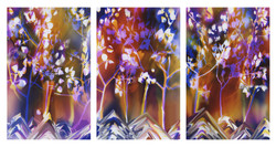 T113 Pando 60x38 3-60x114 panels 2015