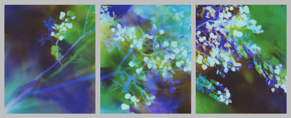 "Aspen Dancing in Sunlight, 24"" x 60"" (3 24"" x 20"" panels), Collection of Univeristy of California Davis Medical Center, Sacramento, CA"