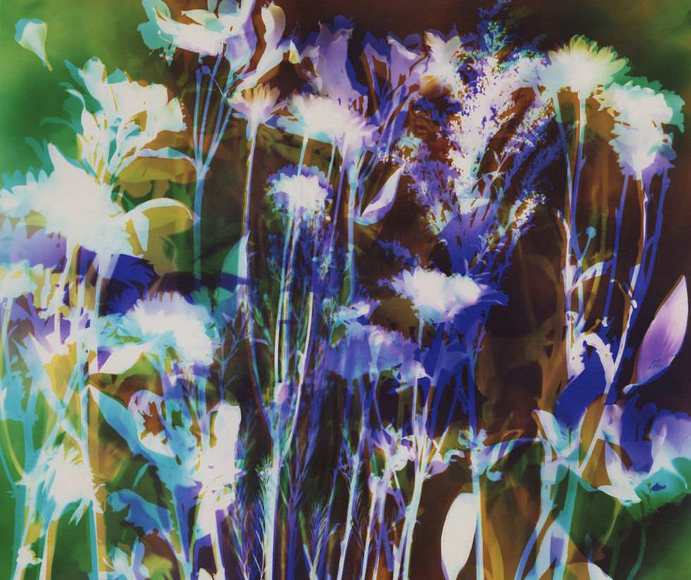"Peace, 20"" x 24"" - Collection of Univeristy of California Davis Medical Center, Sacramento, CA"