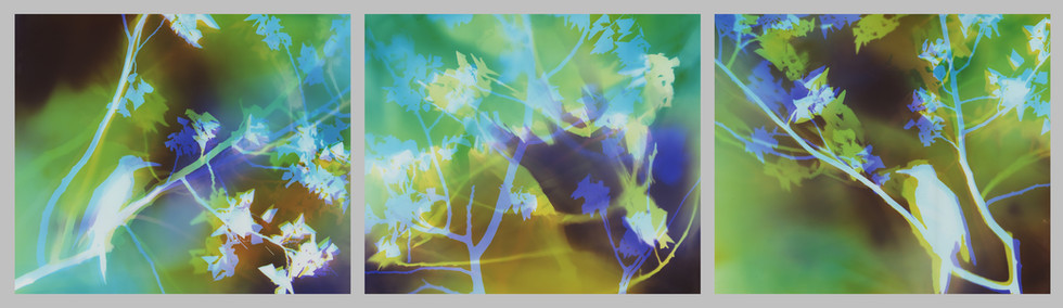 """Birds in Branches, 11"""" x 42"""" (3 11"""" x 14"""" panels), Installed at PureCare Dental Bend, OR"""