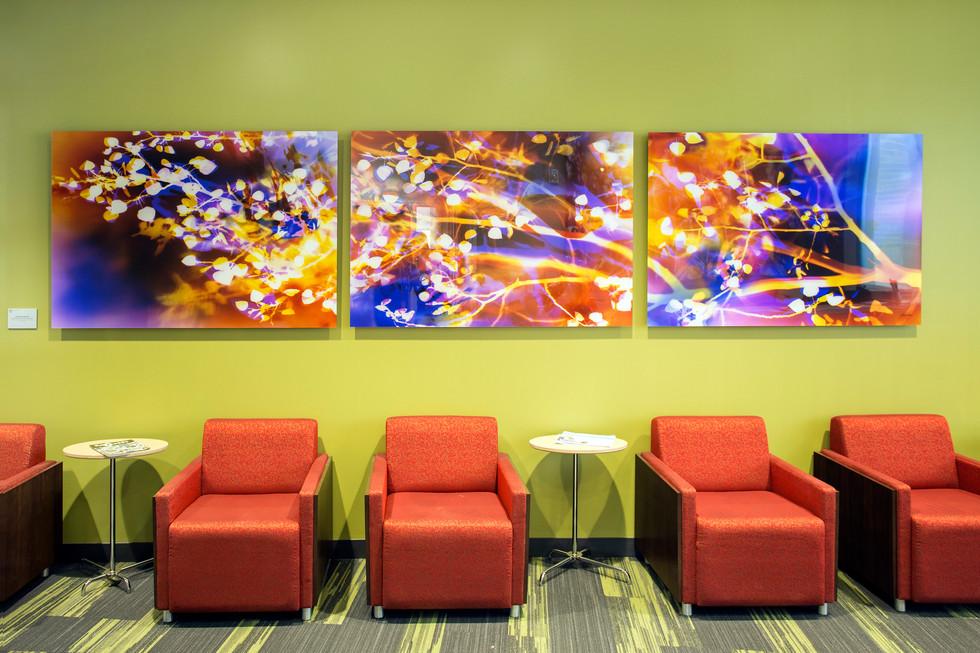 "Inspired by Nature: Pando View, 40"" x 180"" (3 40"" x 60"" panels), Commission by Utah Public Art Program, Installed in Noorda School of Dentistry at University of Utah, Salt Lake City, UT"