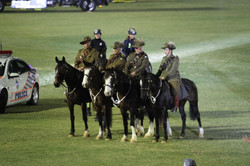 Walers in Light Horse EKKA Nites 2015