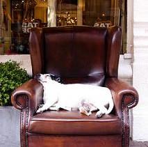Chair, an Object of Wonder