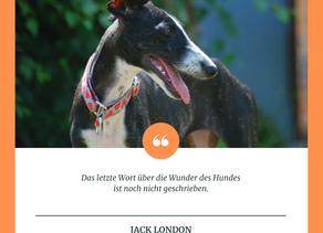 Das letzte Wort über die Wunder des Hundes ist noch nicht geschrieben (Jack London)
