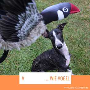 Nationaler Tag des Vogels