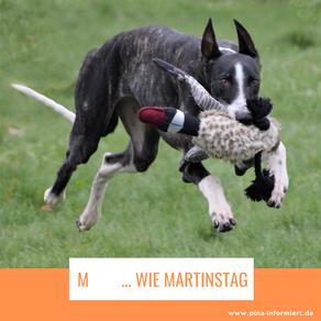 M     ... wie Martinstag