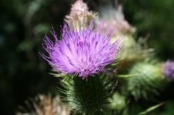 Flor lila vivero_587_391_90