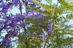 Foto flores lilas vivero_587_391_90