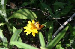 Foto flor amarilla c mariposa vivero_587_391_90