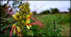 flora p pagina