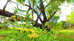 paul 10 flores isla