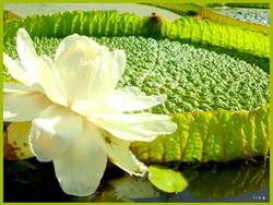 lina monfort .irupe blanco genial