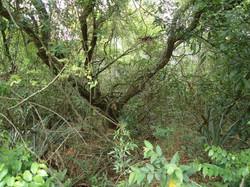 bosque nativo volante