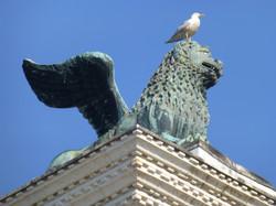 Beware of the Seagulls