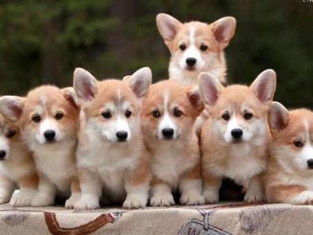 Эфирные масла для собак