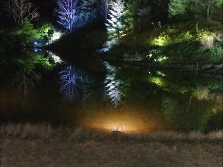 水面に映るライトアップ