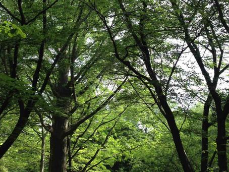 木のような人