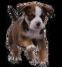 犬画像.png