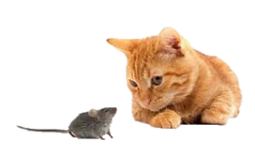 ネズミと猫.png
