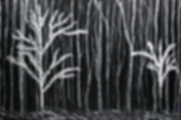 aspen-forest-dolores-deal.jpg
