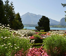 Schloss Oberhofen liegt idyllisch direkt am Thunersee. Zur romantischen Schlossanlage gehört einer der prächtigsten Gärten der Alpenregion. Besuchen Sie diesen Schlosspark mit ...