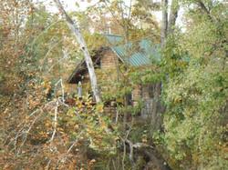 Cabin thru tree