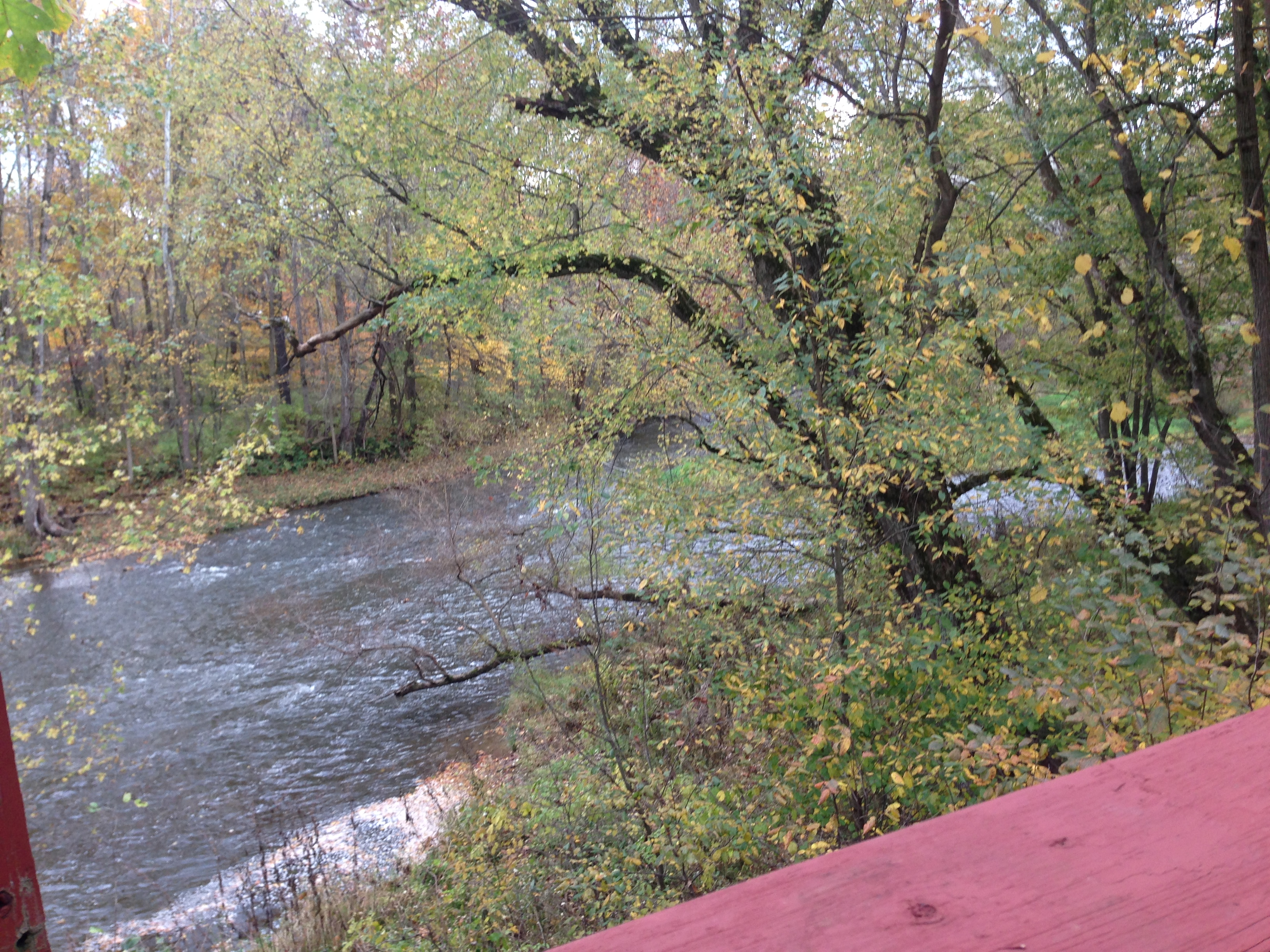 Creek from Deck