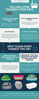 Litter Training Infographic.png