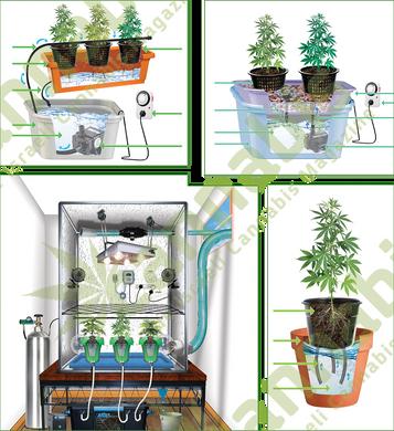 cannabis hydros.png