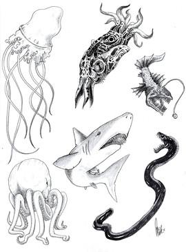 seacreatures.jpg
