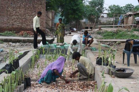 Community Planting DEWATS