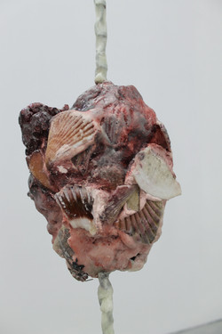 Untitled (shell suspension)