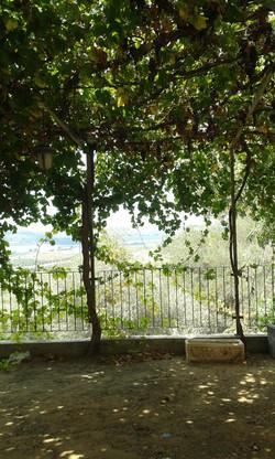 Vineyards of the Sorez valley