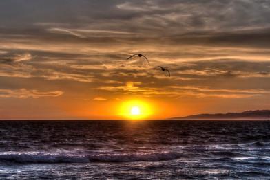 Hermosa Beach - Birds 2.jpg
