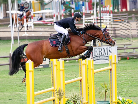 A Pattern of Taking Chances: Bruno Diniz Das Neves, Adele XIII and For Horses