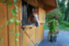 Pickering Equine
