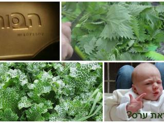 על צמחי בר למאכל, ירקות וערסים