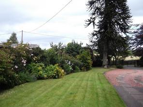 Side Garden.JPG