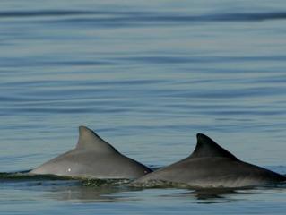 Onde Encontrar Golfinhos no Litoral do Paraná