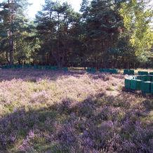 Bienenvölker in de Heide