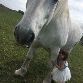 Gentle Horses  Sam