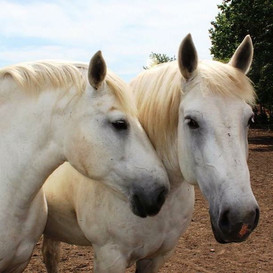 Dolly and Duke
