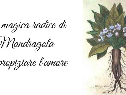 La magica radice di Mandragola