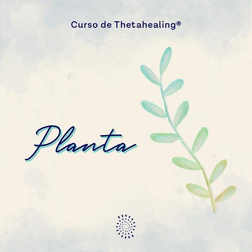 Planta |Online