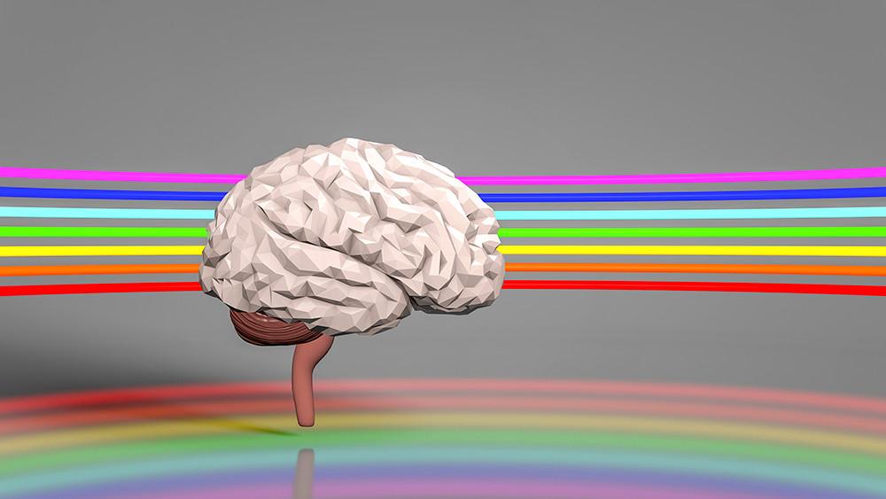 Cerveau V4.jpg