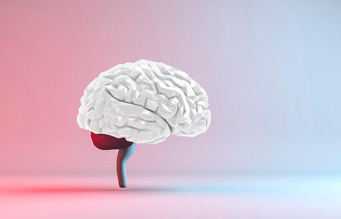 Cerveau V2.jpg