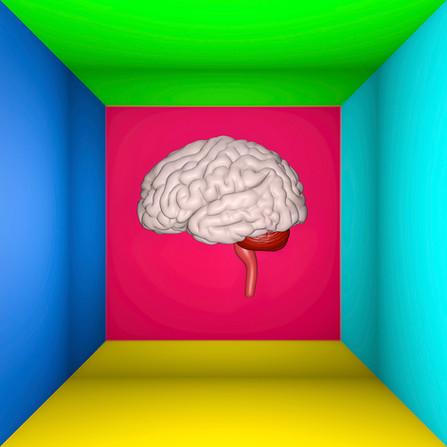 Cerveau V6.jpg