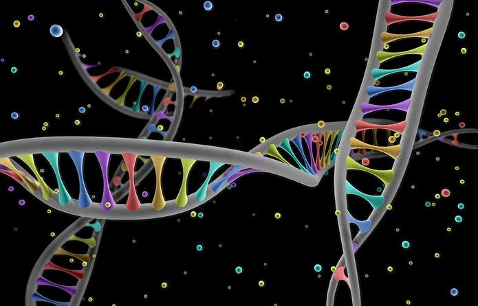 ADN V1.jpg