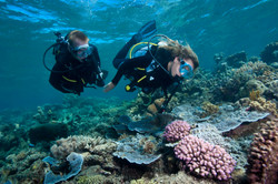 Sunlover Reef Cruise